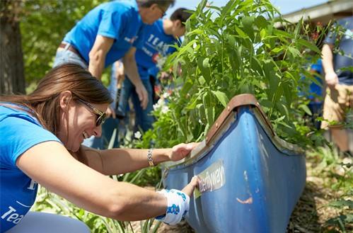 Employees working in a community garden.