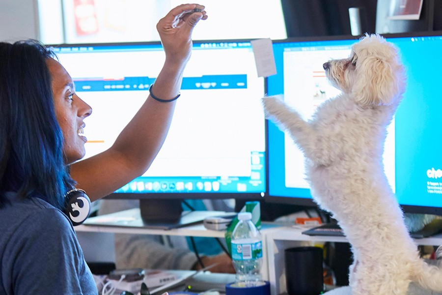 A Chewy team member feeding a treat to a white, fluffy dog in exchange for a trick, with computer screens in the background