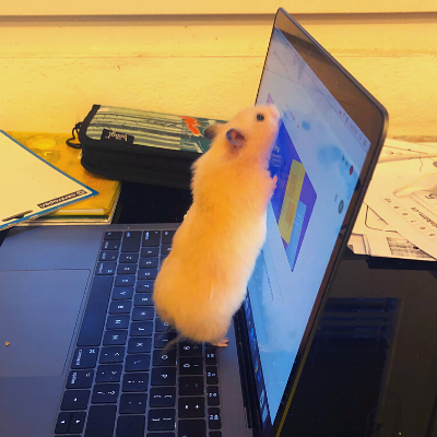A computer mouse!