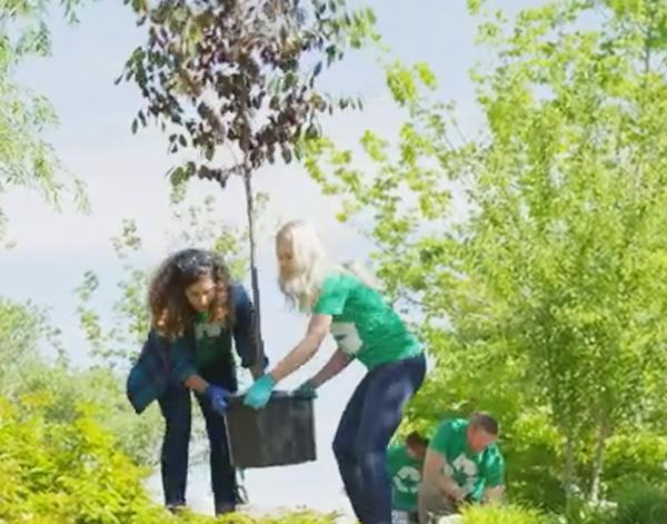 Volunteering to plant trees