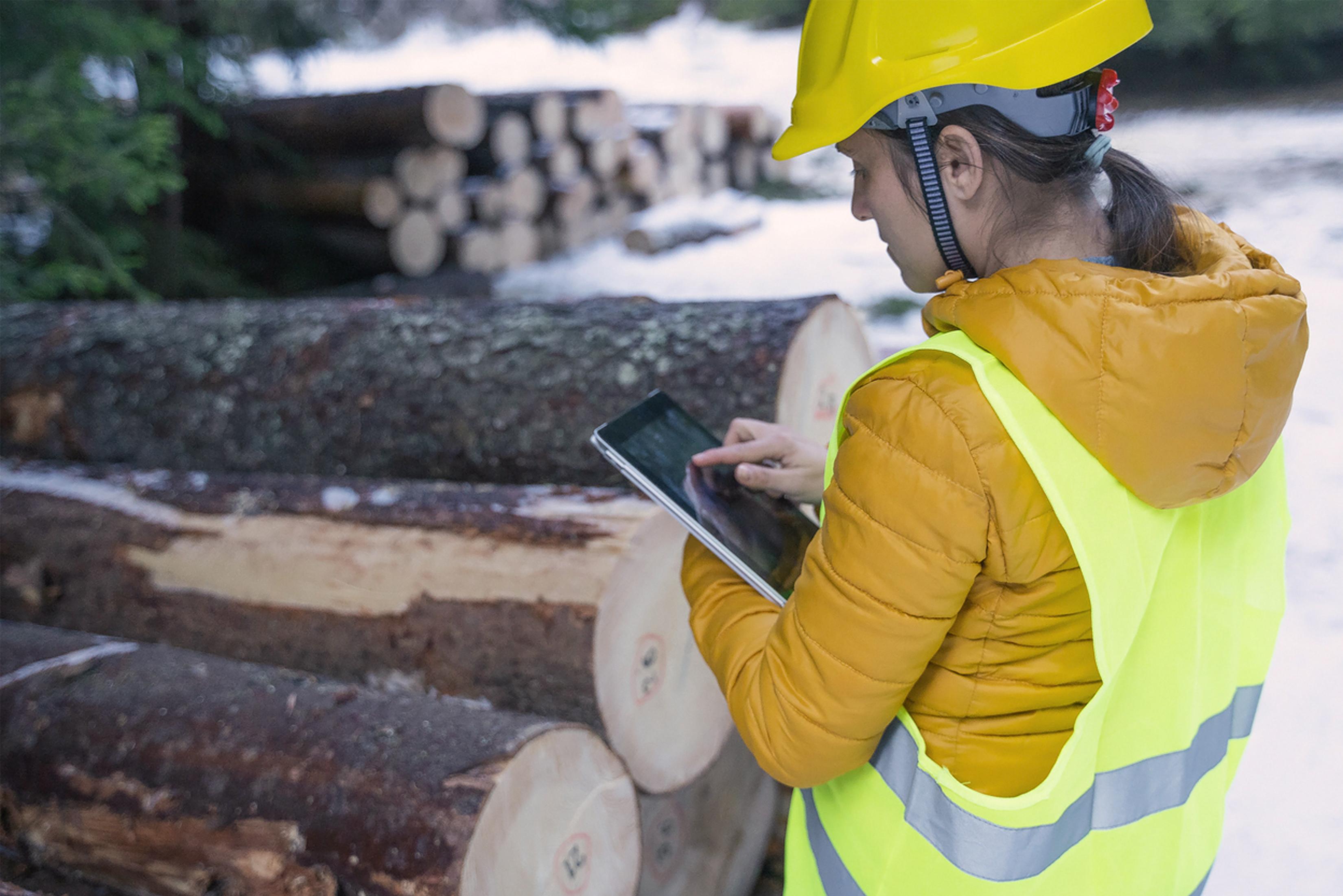 Forestry-jobs-at-David-Aplin-Group