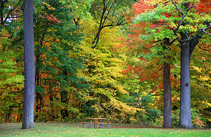 Picnic table and trees near Novi, Michigan