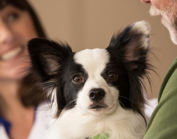 Veterinary Diagnostic Consultants