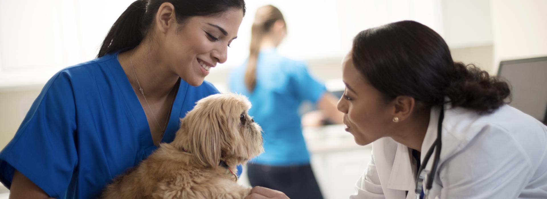 VeterinaryProfessionals