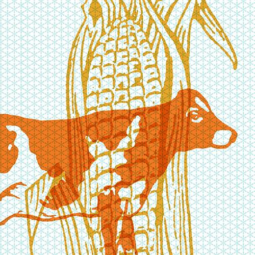 Cow Corn Square