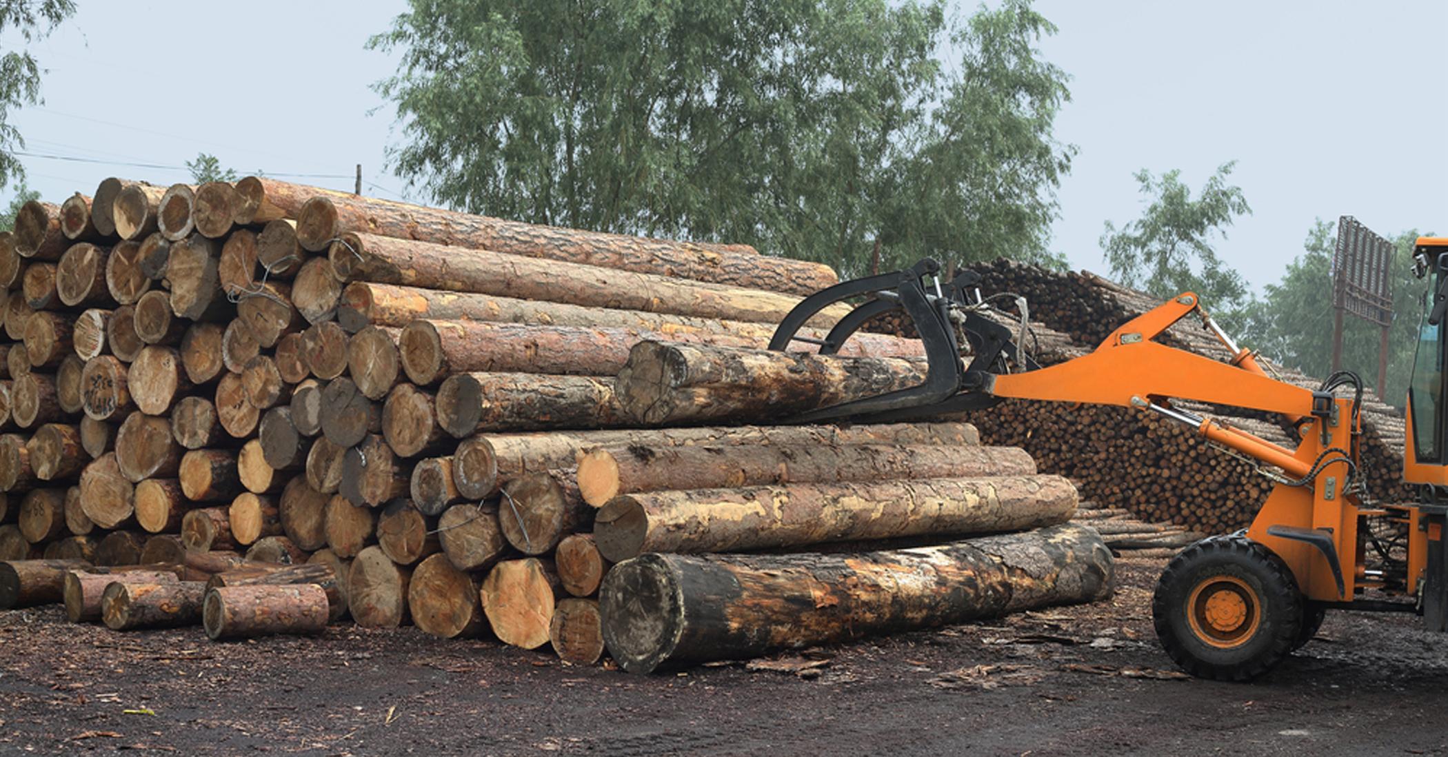 LaSalle Lumber equipment and logs image