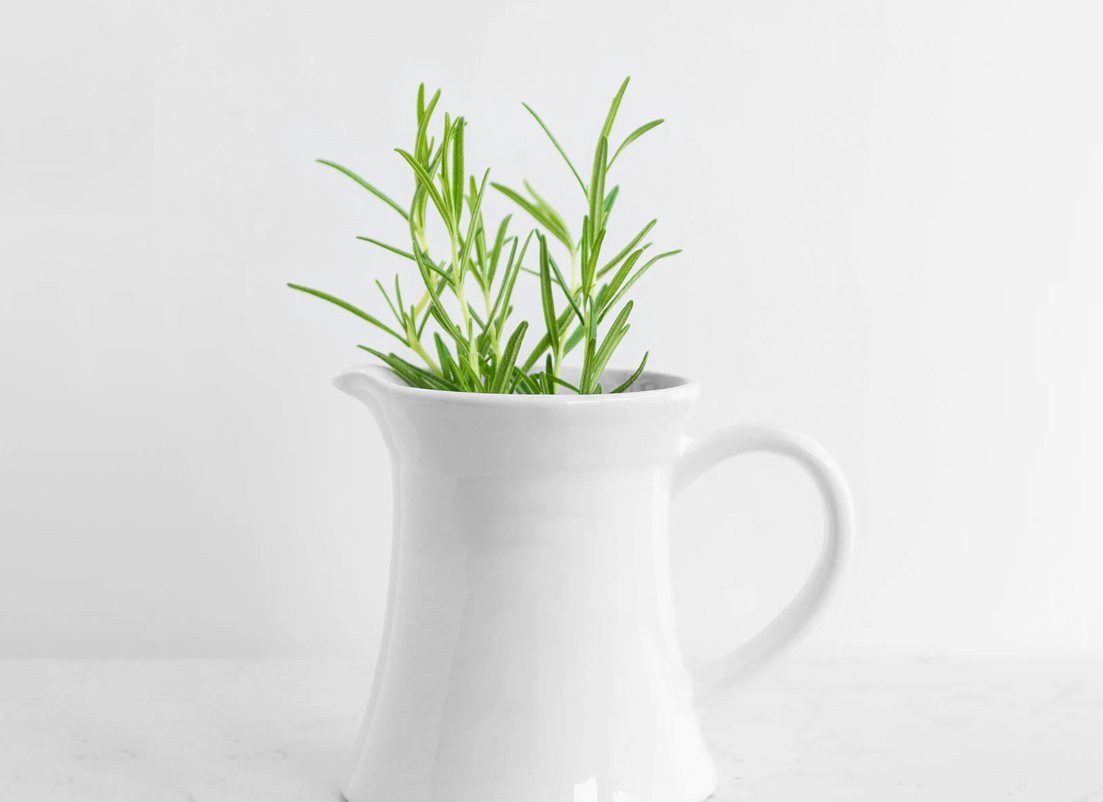 A plant in a jug