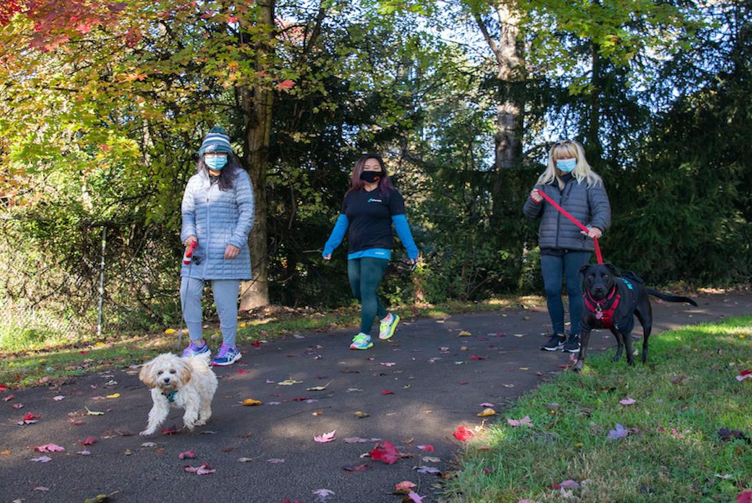 Phenom employees walking dogs