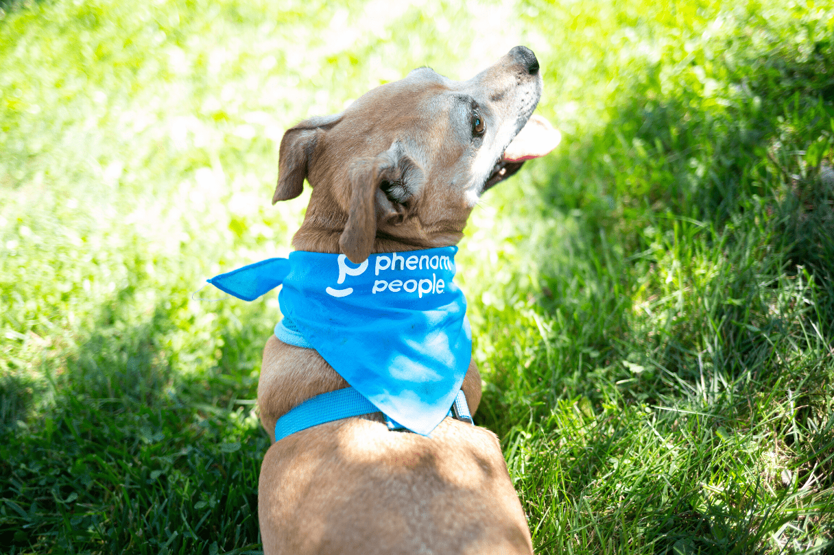 Phenom Cares - Walk for Wags Event