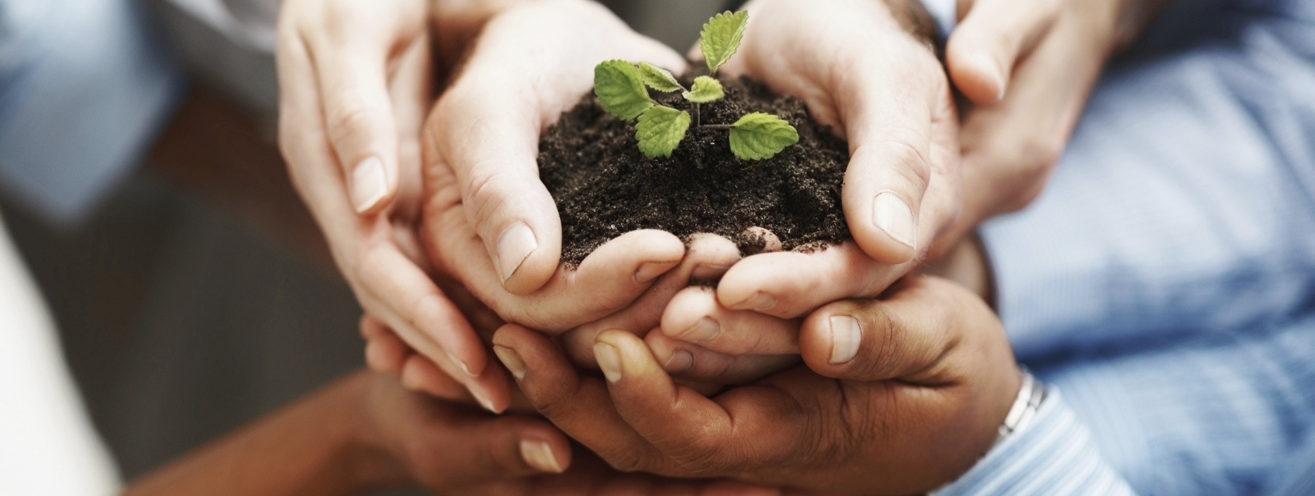 Hands holding earth and sprouting plant