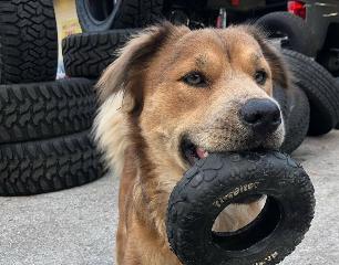 Coats Garage Dog